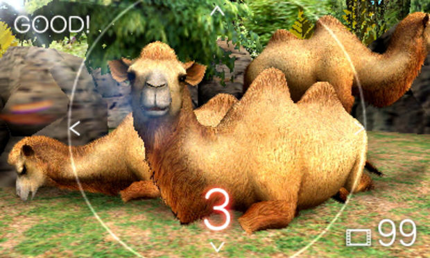 camel-620x